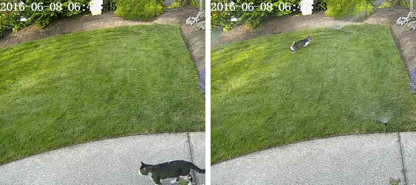 Chasing cats out of the yard with deep-learning-controlled sprinklers