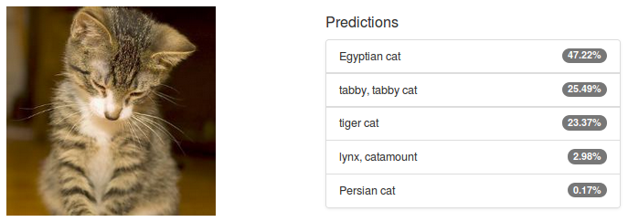 Figure 2: Alexnet classification of an image of a cat from the PASCAL VOC dataset.