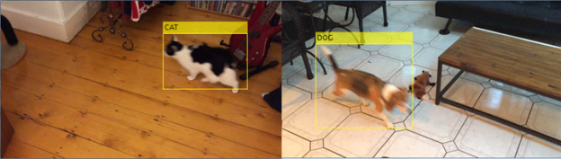 Pet detection and recognition system