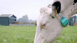 """Fitbit for Cows"" Uses Deep Learning to Provide Insights for Dairy Farmers"