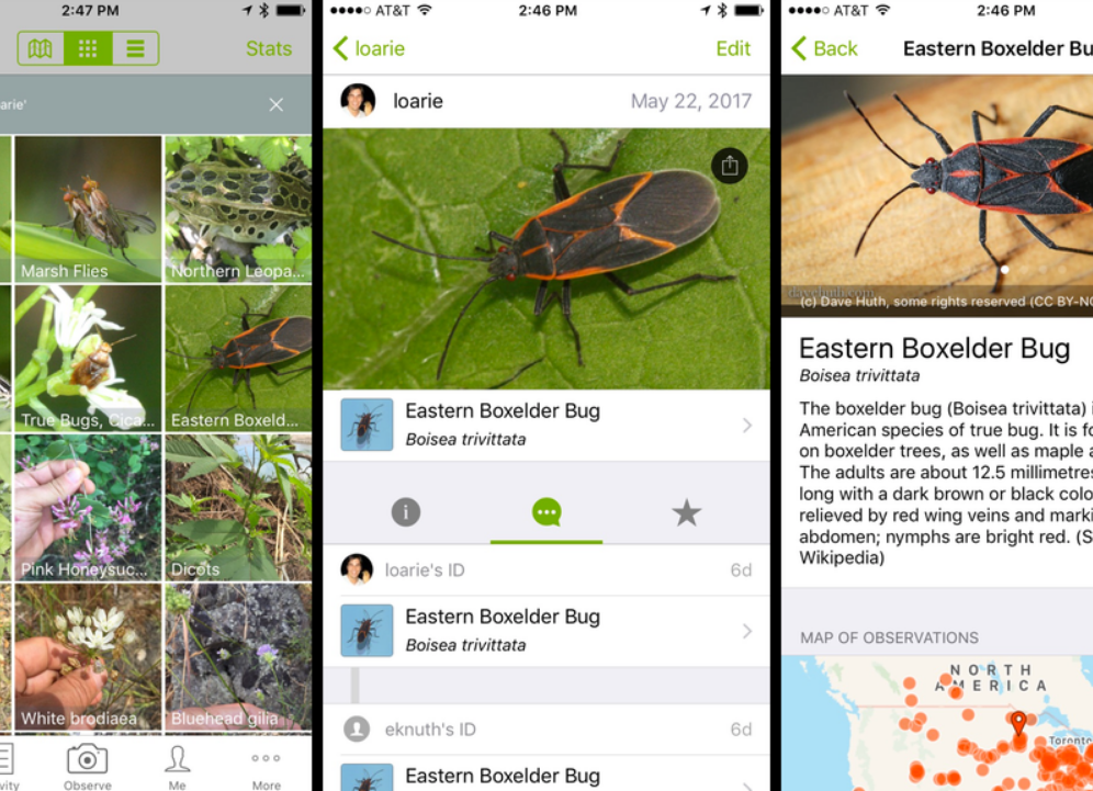 AI App Identifies Plants and Animals In Seconds - NVIDIA Developer